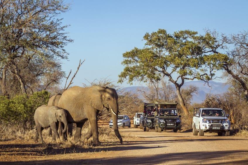 safari parc national kruger