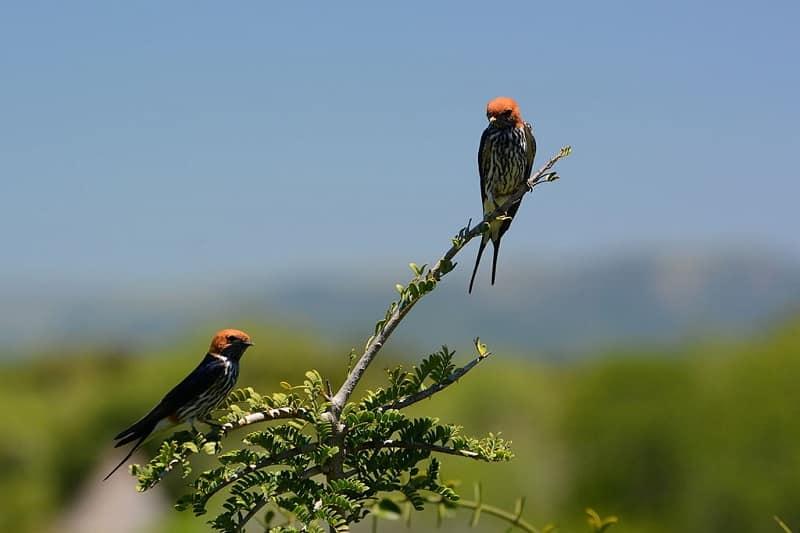 addo oiseaux