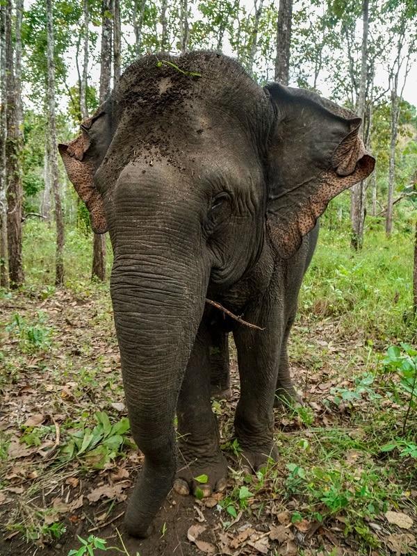 voir des éléphants au cambodge