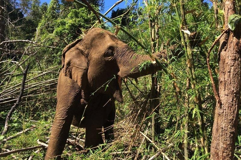 santuaire éléphants cambodge