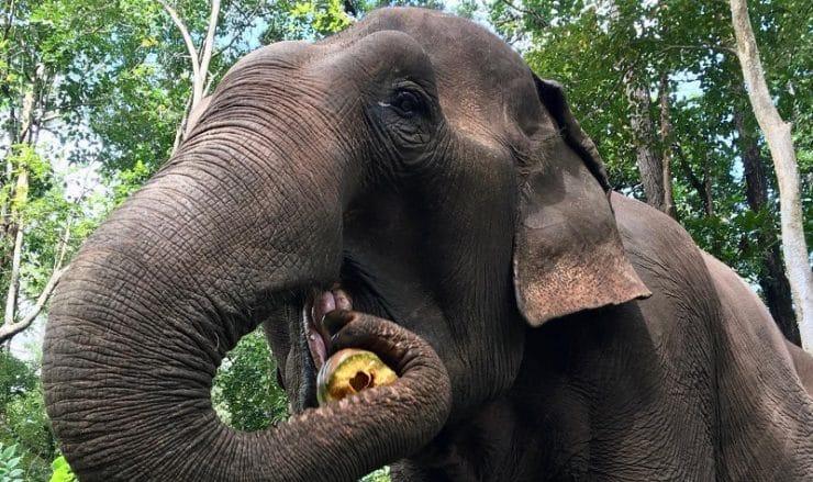 sanctuaire éléphants cambodge