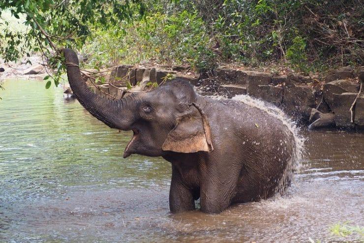sanctuaire des éléphants cambodge