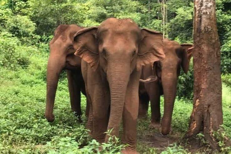 éléphants cambodge