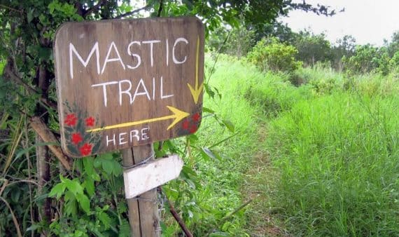 mastic trail cayman
