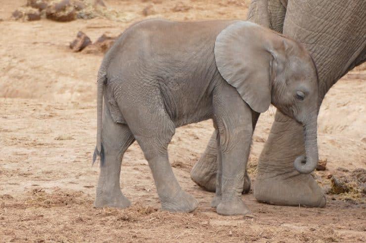 parc national des éléphants addo
