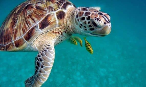 Snorkeling plongée à Tahiti animaux observer