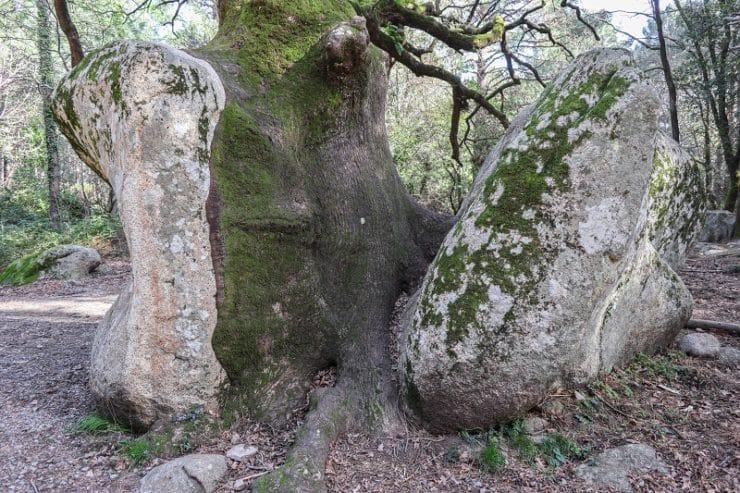 arbre entre deux rochers