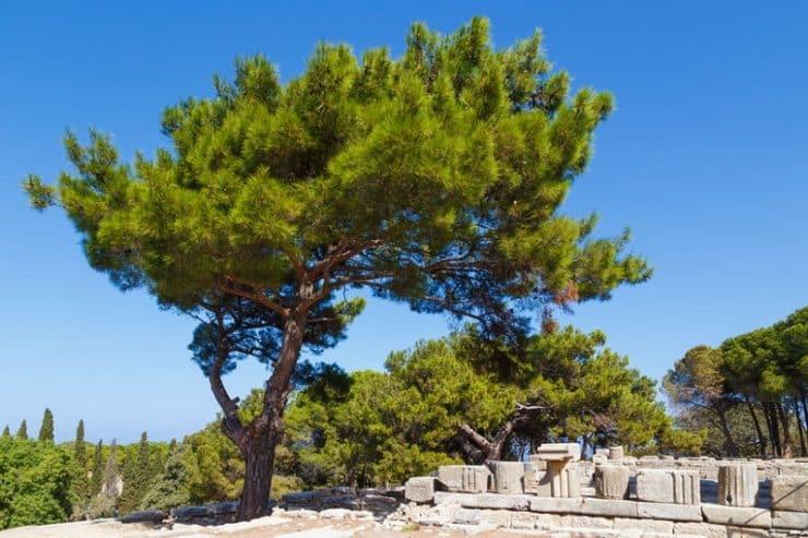site archeologique ialyssos