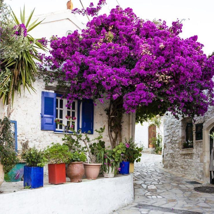 village afionas