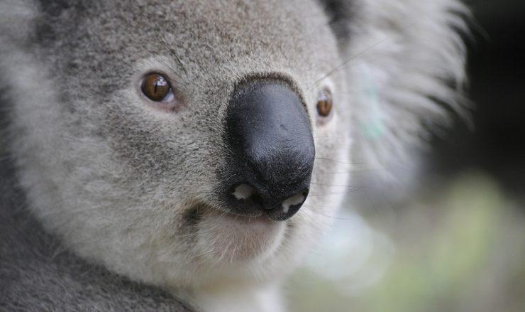 choses à faire pour voyager en australie