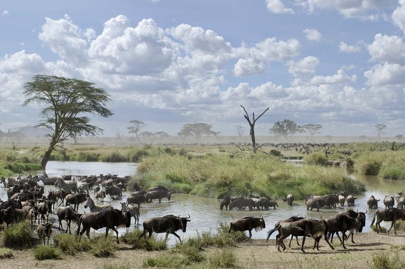 migration gnous serengeti