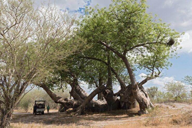 safari Parc national de Nxai Pan