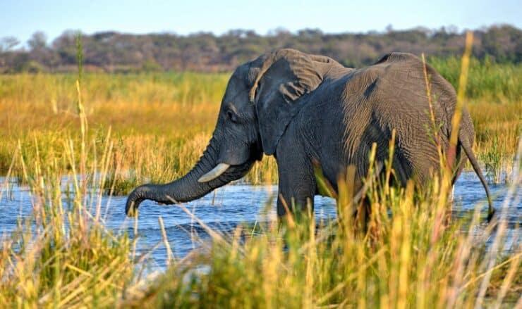 kwando safari