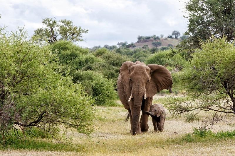 éléphant à mashatu