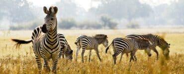 meilleurs parcs nationaux de Tanzanie