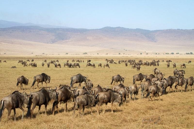 parc national de tanzanie