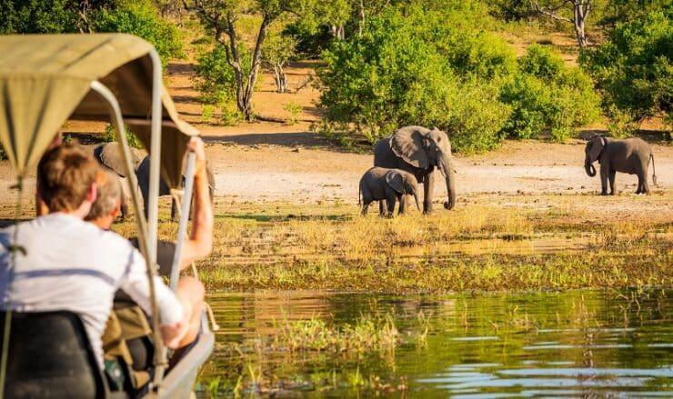 Meilleures destinations safari au Botswana