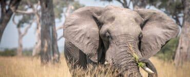 Parc national de Chobe