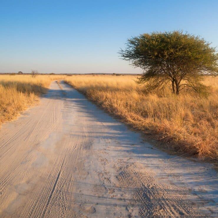 visiter réserve kalahari central