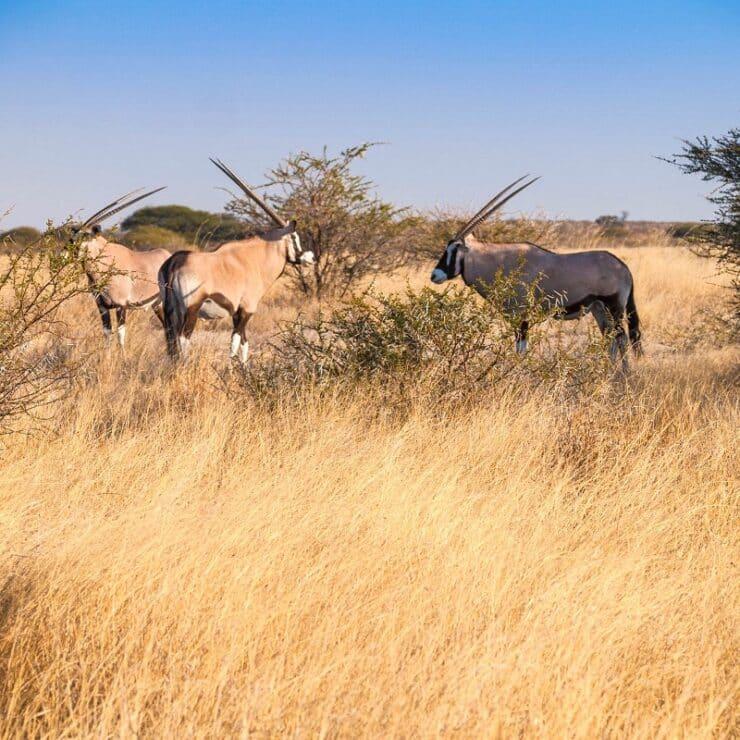 réserve de chasse du kalahari central