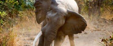 Parc national du Bas-Zambèze